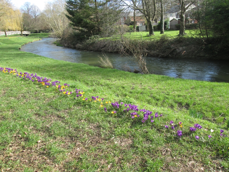 Farnham River and Crocus Path