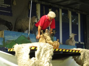 Sheep Sheer